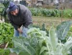 RECORD DI GIOVANI AGRICOLTORI