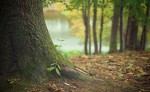 GIORNATA FORESTE